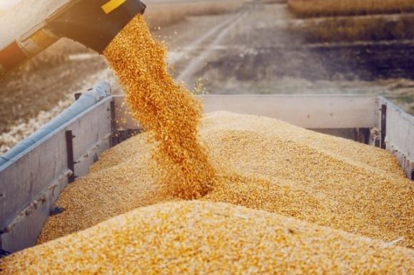 Елеватори Ristone Holdings продовжують приймати зернові культури