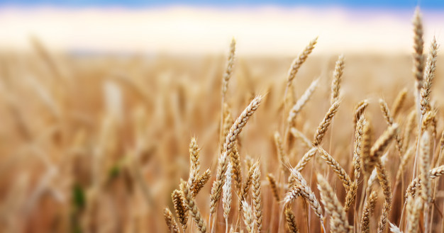 Підсумки-2020: як розвивалося рослинництво в Ristone Holdings