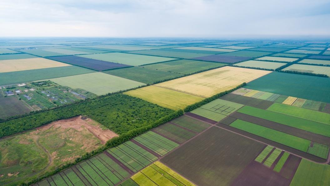 Ristone Holdings планирует увеличить земельный банк на 40 тыс. га