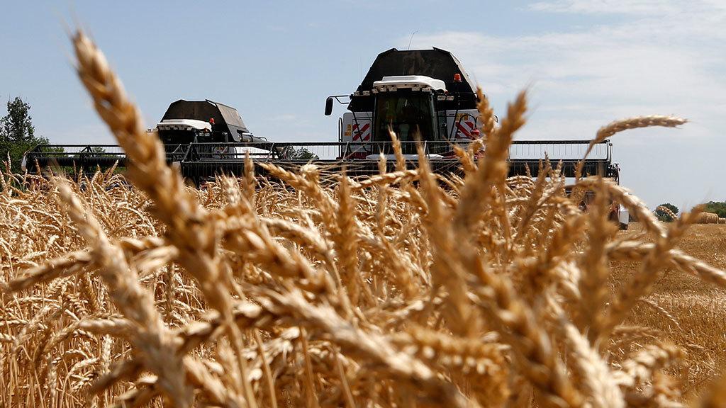 У Ristone Holdings розпочали збирання озимої пшениці та ярого ячменю