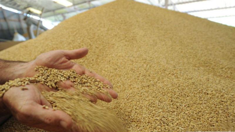Елеватори Ristone Holdings прийняли на зберігання вже 100 тис. т зернових