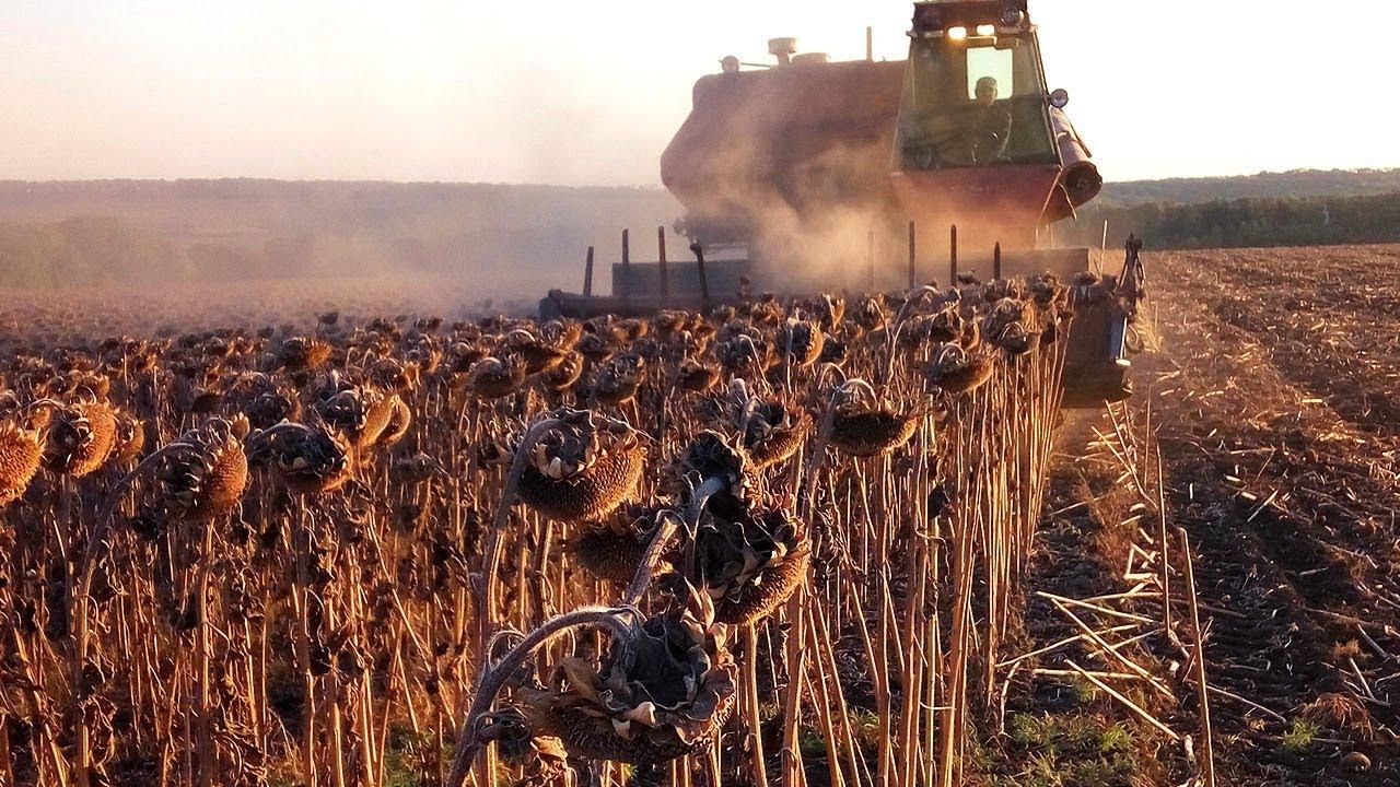 Новини з полів: в RH почалося збирання соняшнику та посів озимої пшениці
